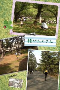 浜寺公園緑